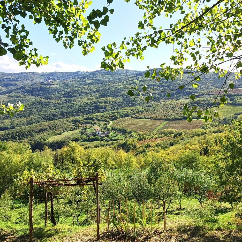 Pogled iz Motovuna, foto: Porodične gastronomije